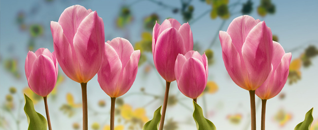 春分養生著重調暢肝氣及平衡心身